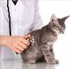 Ветеринарные клиники в Удомле